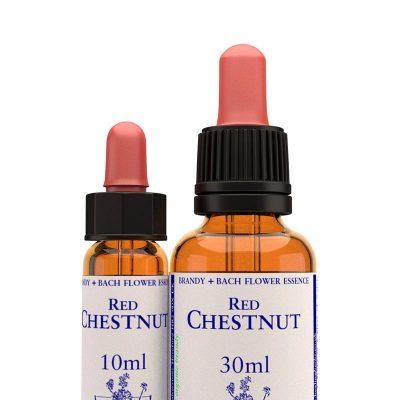 Red Chestnut / Червен кестен